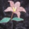 (25)Pintyő 2  Liliom