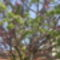 A vegyes virágú fa.