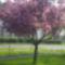 Virágözön a fán.