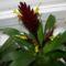 Pikkely virág