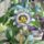 Golgota virág (Sziporka képe)