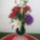 Szalontainé Terike virágai