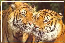 TIGGA par szeretete