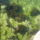 Vizinoveny_773573_27410_t