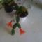 kaktusz1 3