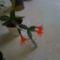 kaktusz1 4