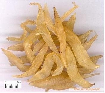 Chinese-Herbs-Medicine-Asparagus-Cochinchinensis-