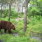 Medvék 023
