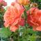 virágai 2