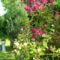 virágai 4
