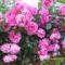 virágai 7