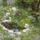 Peják Gizella növényei