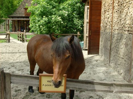 Margitsziget - Az állatkert lakói (13)