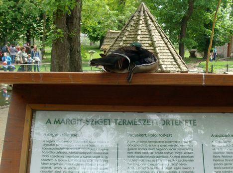 Margitsziget - Az állatkert lakói (4)