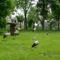 Margitsziget - Az állatkert lakói (6)