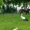 Margitsziget - Az állatkert lakói (8)