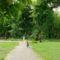 Margitsziget - Fák, növények (1)