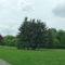 Margitsziget - Fák, növények (4)