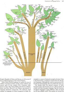 Nyelvek fája 3