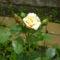 karamel rozsam