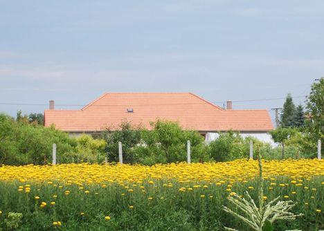 Teri virágai, a háttérben Norbiék háza