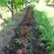 Fodros saláta a szőlő árnyékában