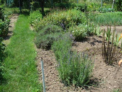 Gyógy és fűszernövények