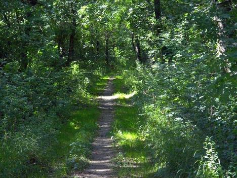 A völcseji Privát-út