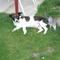 kutya úr és macska fiú