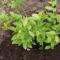 növényeim 15