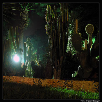 Növények a parkban
