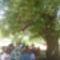 fa alatt