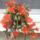 Viragzo_kaktusz_795806_47961_t
