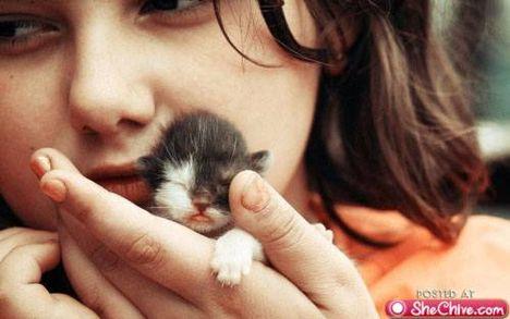 állati kölykök 8