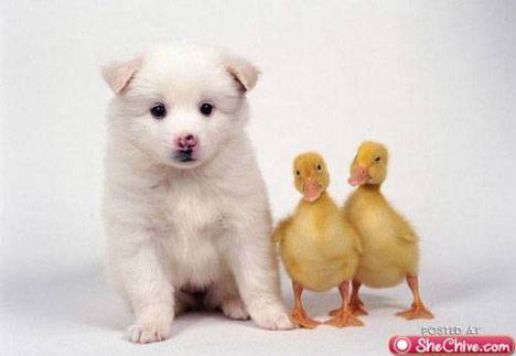 állati kölykök 9