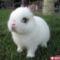 cute-animals-20