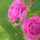 kertem virágaim 1