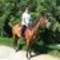 Lövői lovas