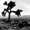 u2-the-joshua-tree-wallpaper-1024-768