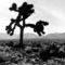 u2-the-joshua-tree-wallpaper-1280-1024