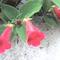 cserepes virág
