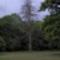 Szarvas-i Arborétum