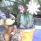 Virágzó gömbkaktusz