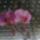 Soós Joli orchideái
