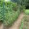 paradicso és uborka egymás mellett