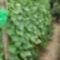 uborka és zeller