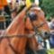 net horse's16