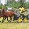 net horse's17