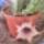 Barsi Barbi kaktuszai