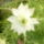Kerti virágok 12